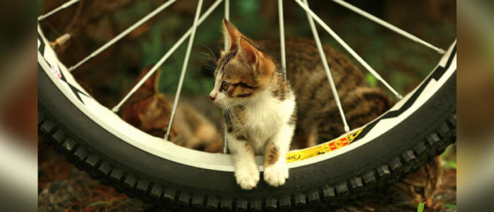 featured-website-cat[2804].png